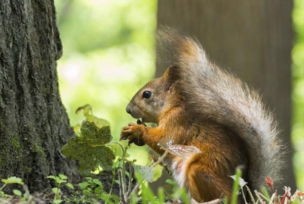 squirrel near a tree